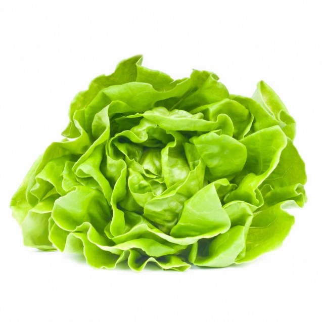 French Lettuce
